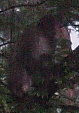 20040807-2.jpg
